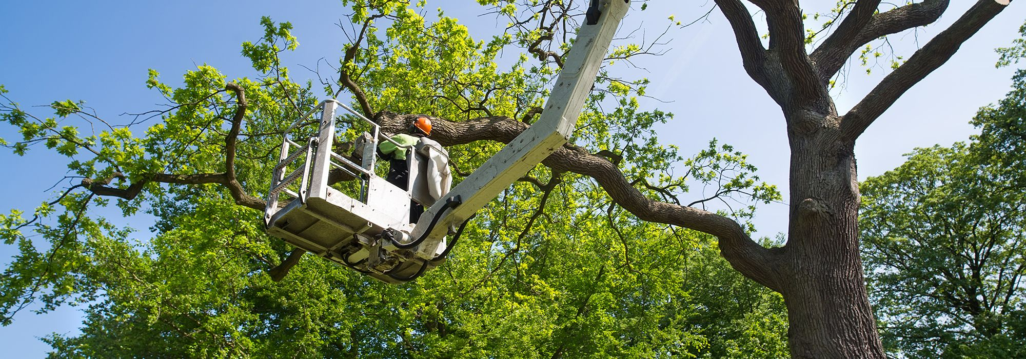 Tree Felling Services In Leicestershire