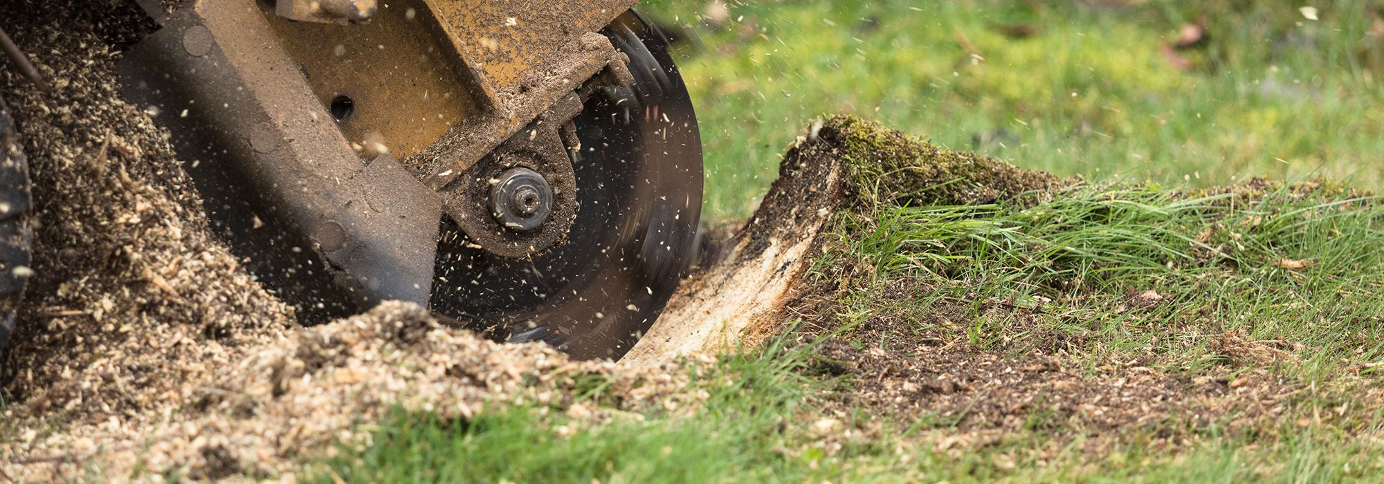 Stump Grinding Services Leicestershire