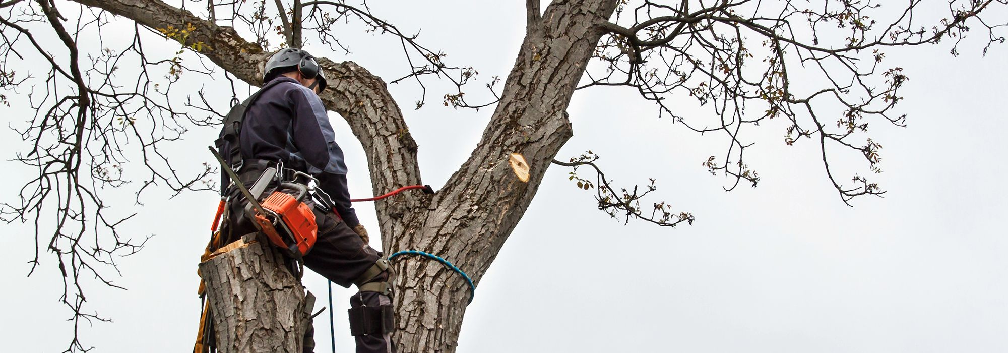 Domestic And Commercial Tree Services Leicester